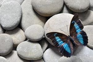 The Butterfly Effect & Its Impact on A/E/C Firms